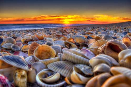 Seashells at Beach During Sunrise Hutchinson Island Florida