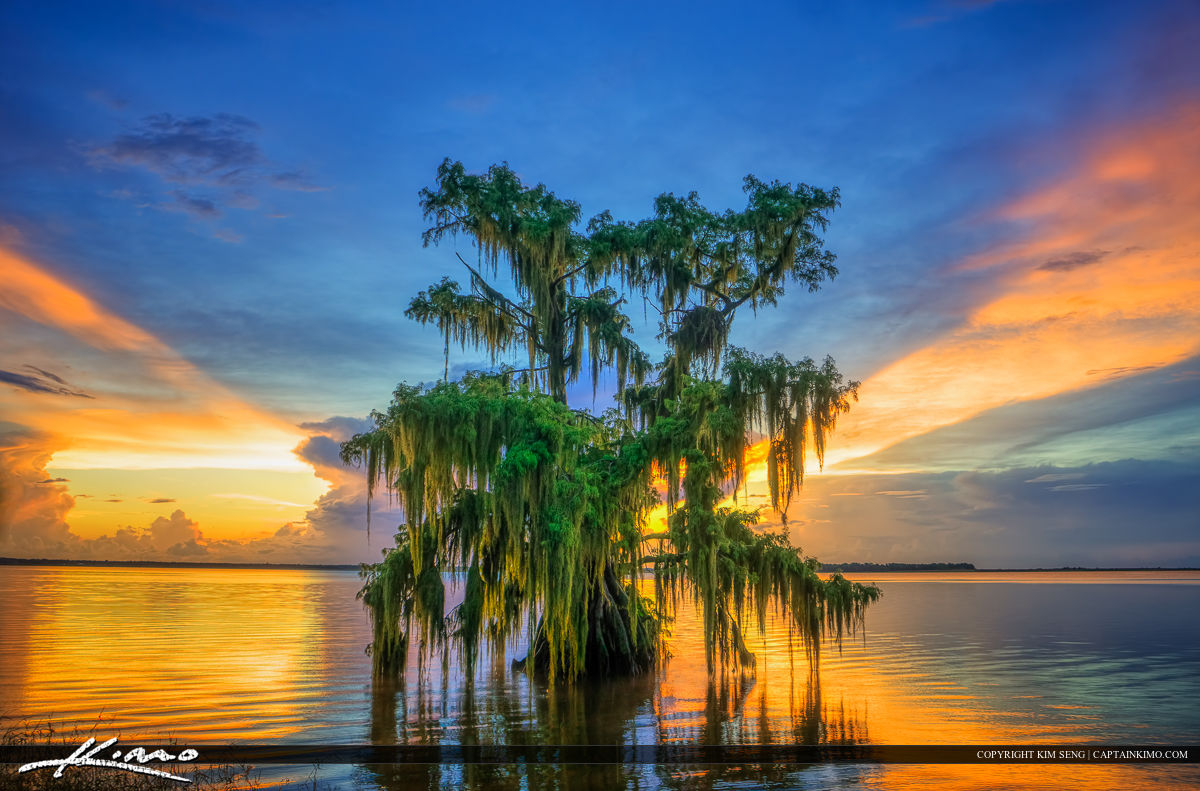 Sunset from Lake Istokpoga in Lake Placid, Florida with a beautiful cypress tree covered in spanish moss. Three exposure HDR image tone mapped in Photomatix Pro HDR software.