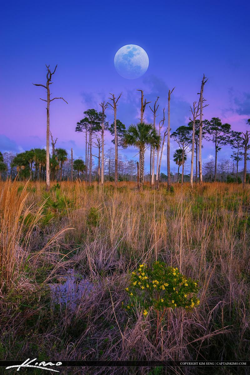 Moon Over Florida Landscape at Wetlands