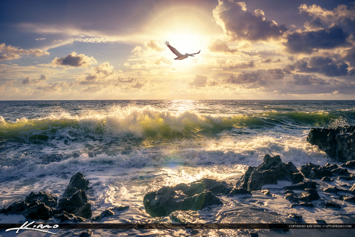 A pelican flying over the ocean at Coral Cove Park during sunrise at beach.