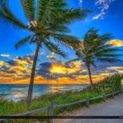 Coconut Tree Sunrise at the Beach Jupiter Island