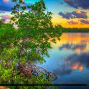 Mangrove Tree Sunset MacArthur Park Fishing Spot