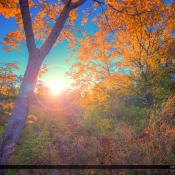 Portland Maine Fall Colors Along Fore River