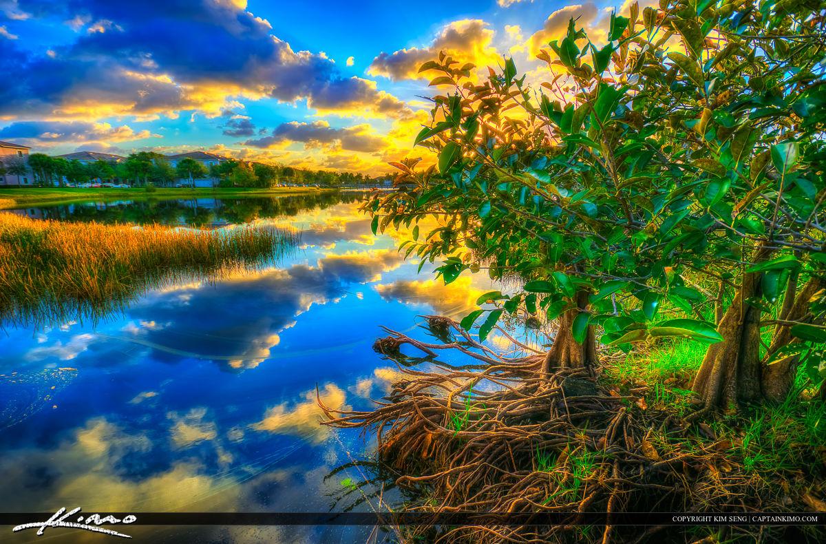 Sunrise Apple Tree Pond Apple Tree at Lake
