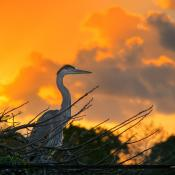 Blue Heron Sunrise Delray Beach Florida