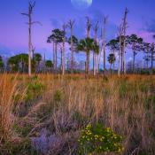 Moon Over Florida Landscape at Wetlands