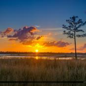 Sunset Pine Glades Wetlands Jupiter Florida