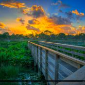 Wakodahatchee Wetlands Sunrise Boardwalk Delray Beach FL