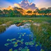 Wetlands at Delray Beach Florida Sunrise