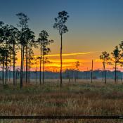 Pine Glade Sunset Over Wetlands Forest Jupiter Florida
