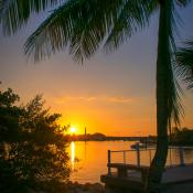 Coconut Tree Sunrise Sawfish Bay Park Jupiter Waterway