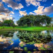 Dyer Park Lilypads at Lake by Banyan Tree