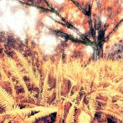 Fern Forest Tree Photo Art