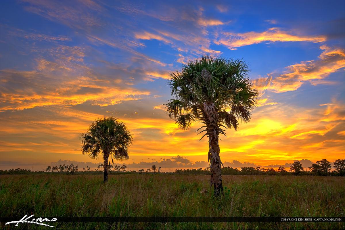 Florida landscape hdr photo pine glades natural area for Natural landscape