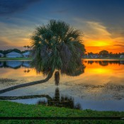 Sunset at the lake with a beautiful palm tree hanging over the water in Palm Beach Gardens, Florida. HD R image created in Photomatix Pro and Topaz software.