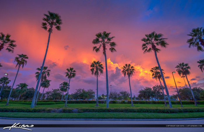 Gardens mall road with palm trees pbg florida - Palm beach gardens mall shooting ...