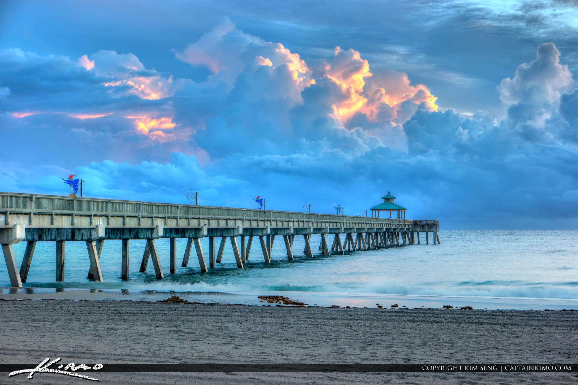 Florida terns along the beach at deerfield beach florida for Deerfield beach fishing pier