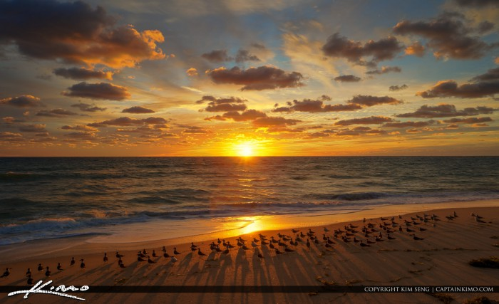 Black Skimmers Sunbathing at Beach