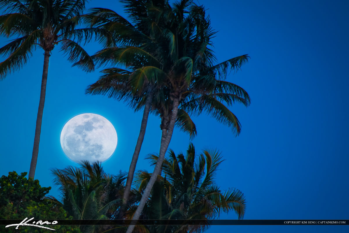 Super Moon Rise at Hillsboro Inlet Lighthouse Coconut Trees
