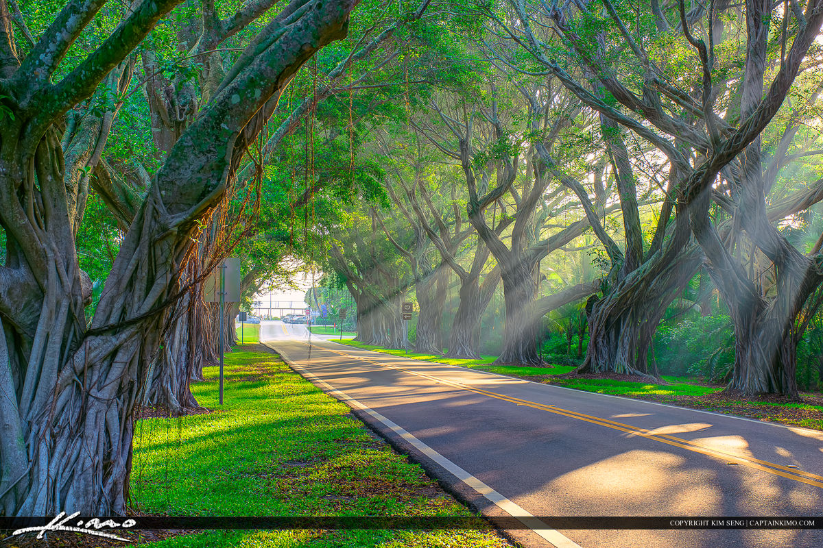 Sunrays through banyan trees along Bridge Road in Hobe Sound, Florida. HDR image tone mapped using Photomatix Pro HDR software.