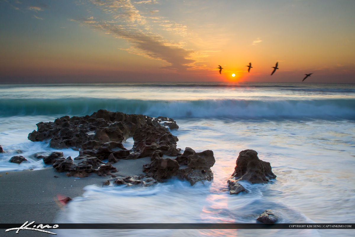 Sunrise at Coral Cove Park beach with pelicans flying over wave on Jupiter Island.