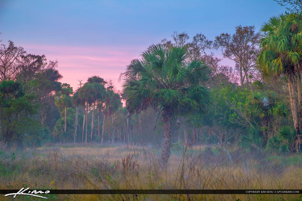 Foggy Florida Morning Landscape at Riverbend Park
