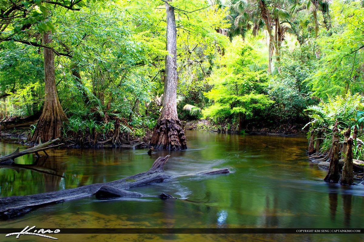Loxahatchee River Backwaters Cypress Trees