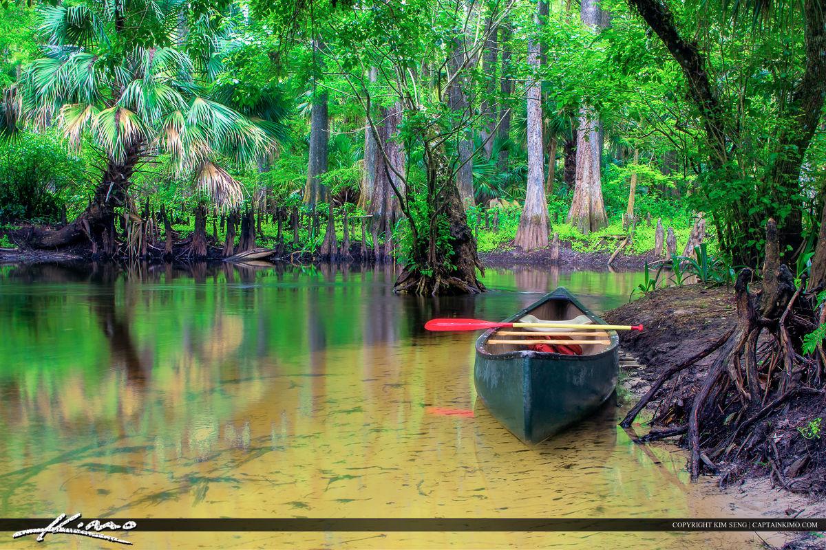 Loxahatchee River Canoe along the Shore