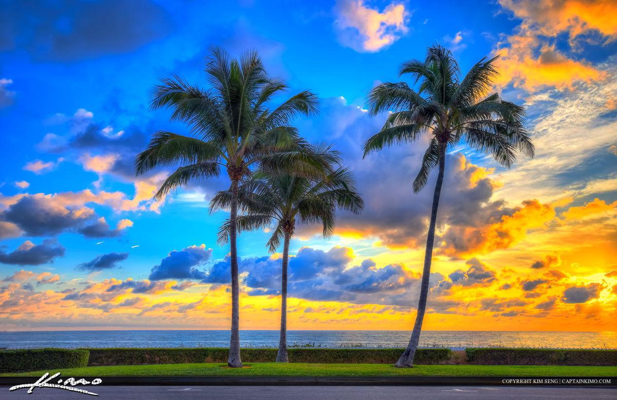 Ocean Boulevard Coconut Tree West Palm Beach