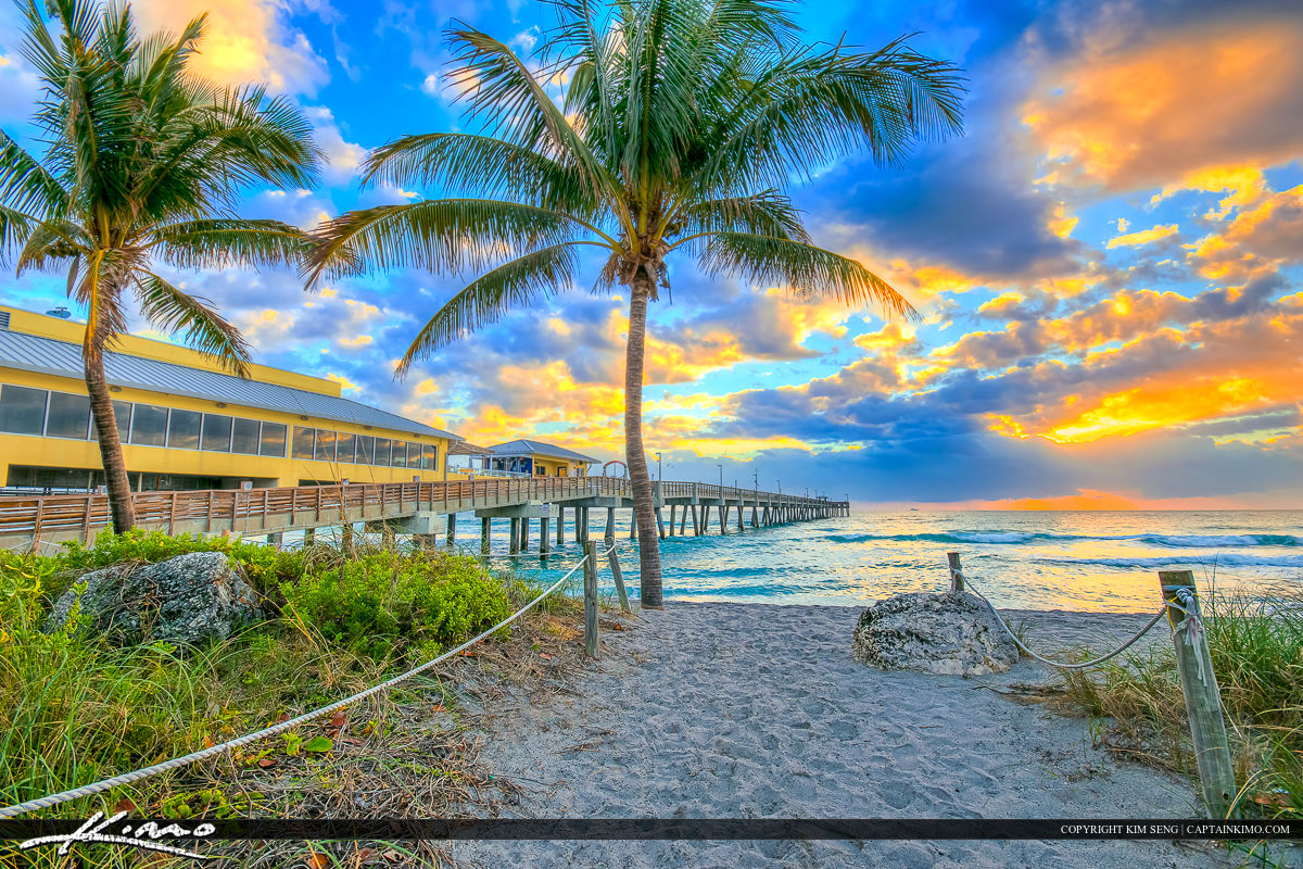 Dania Beach Florida Coconut Tree at Beach Entrance