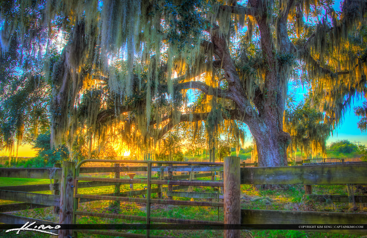 Gainesville Ranch in Paynes Prairie during Sunset