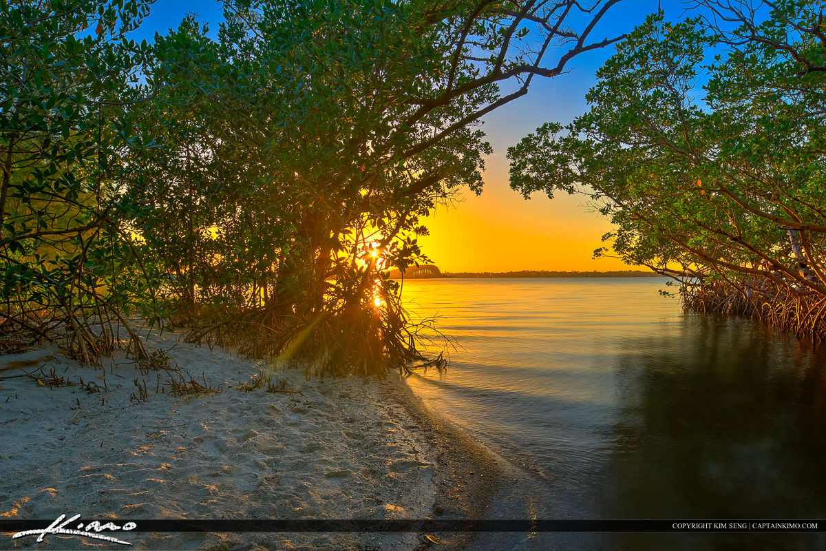 Jensen Beach Florida Sunset Mangrove Canopy