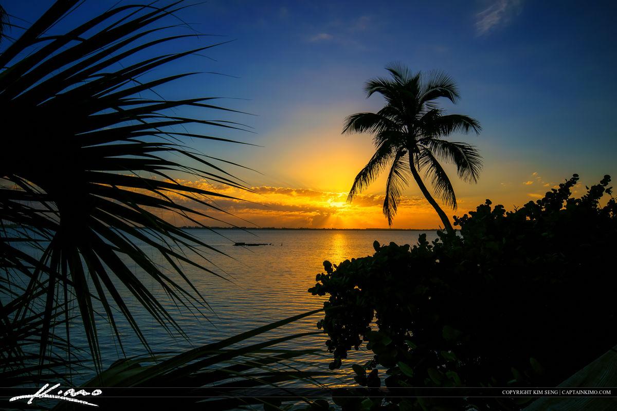 Palm Tree Sunrise at Indian Riverside Park Jensen Beach