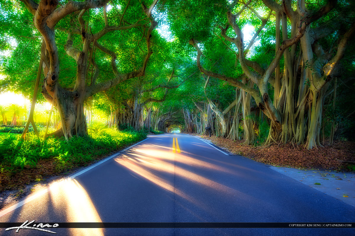 Banyan Tree Road at Stuart Florida