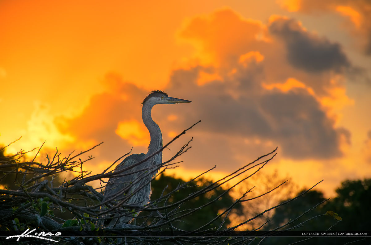 Blue Heron Sunrise Delray Beach Florida