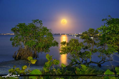 Jensen Beach Moon Rise at Indian Riverside Park Mangrove