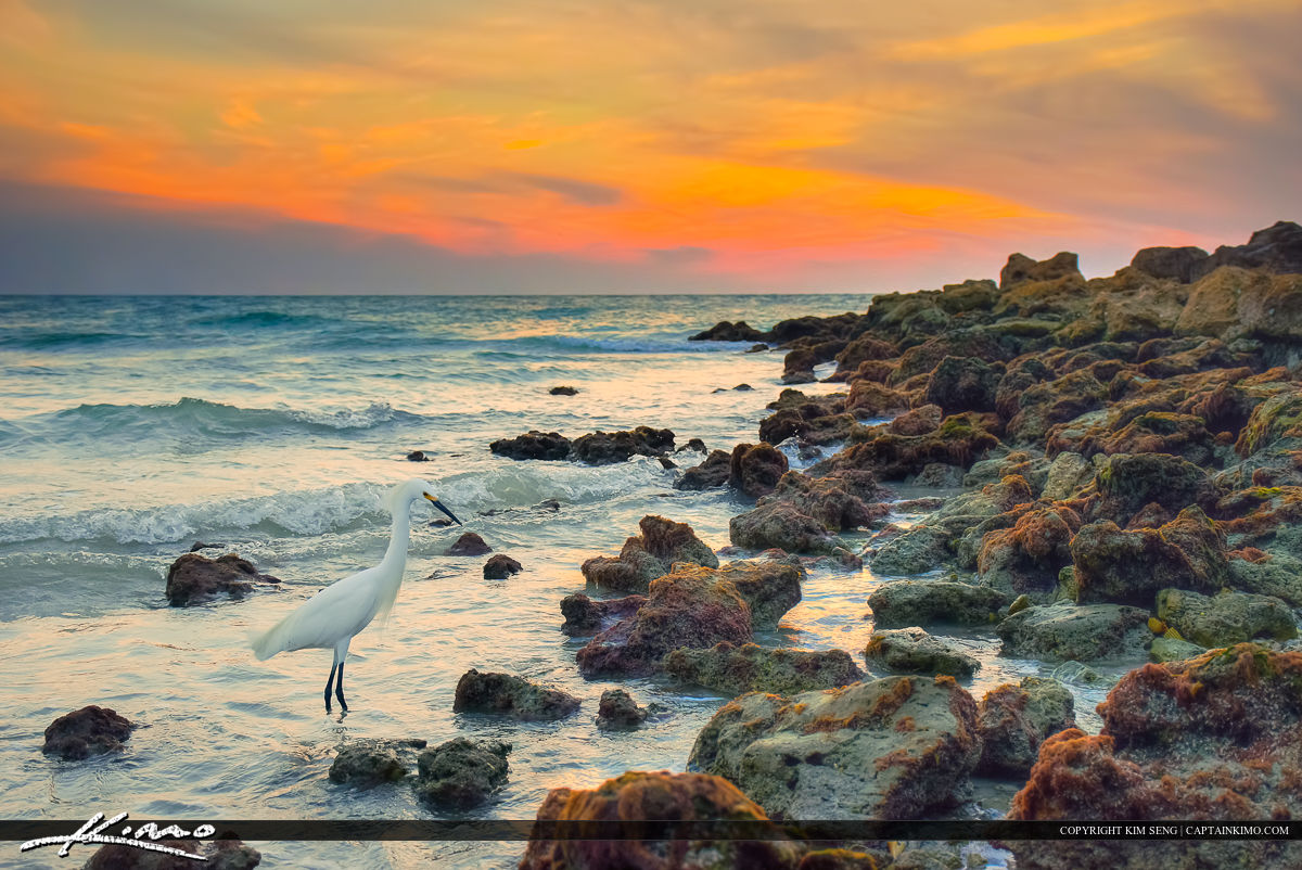 Naples Florida White Bird Egret along Inlet