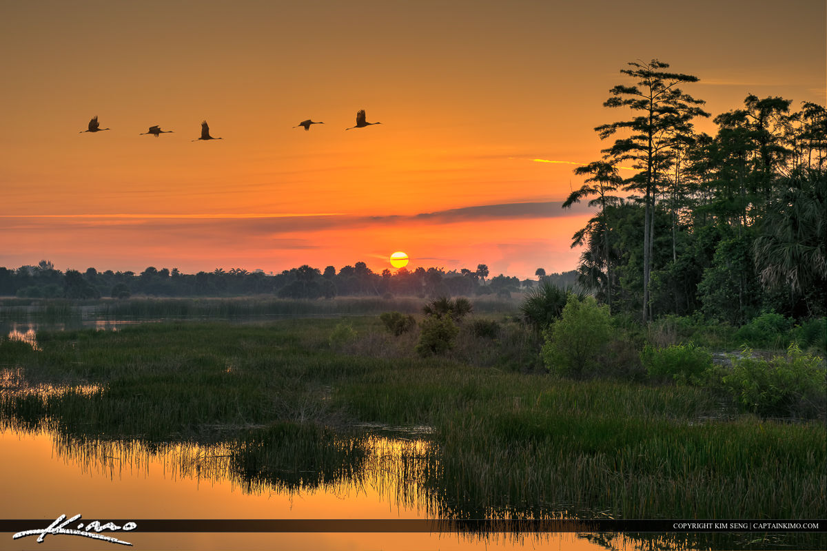 Sandhill Crane Flock in Flight at Sunrise