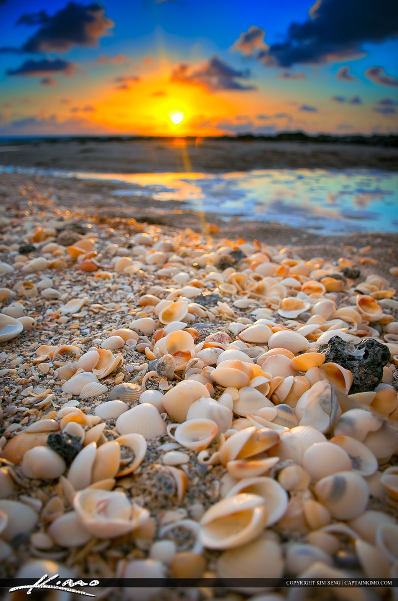 Seashells Along the Beach During Sunrise