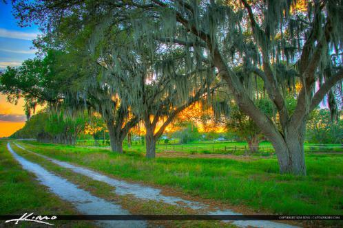 St Cloud Florida Sunset Osceola County Spanish Moss on Oak Tree