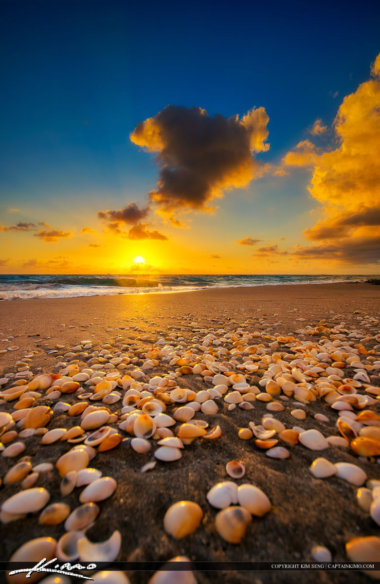 Vertical Beach Sunrise Photo with Seashells