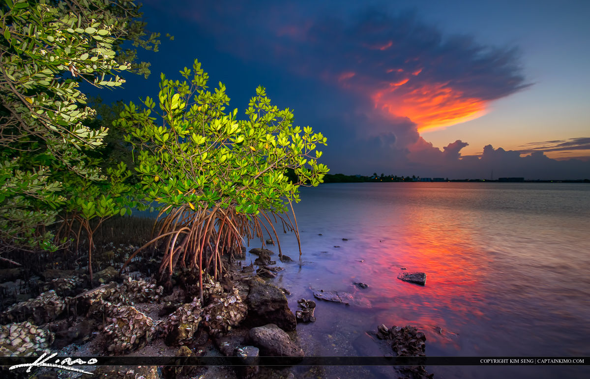 Mangrove at Lake Worth Lagoon with Colorful Clouds