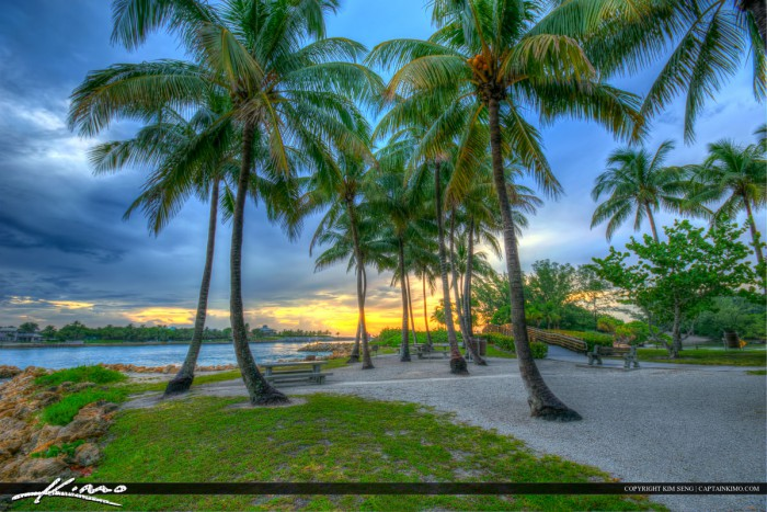 Coconut Tree at Dubois Park Jupiter Inlet