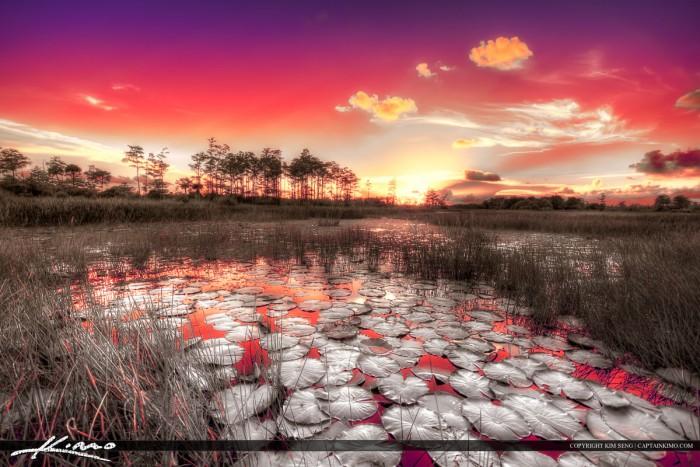IR Sunset Over Palm Beach Gardens Florida Wetalnds