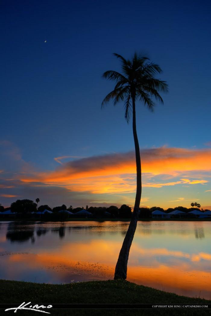 Palm Beach Gardens Sunset Coconut Tree at Lake