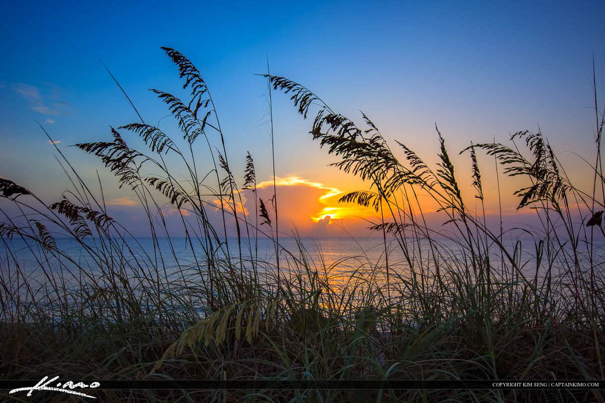 Seaoats at Beach During Sunrise in Coral Cove Park Jupiter Islan