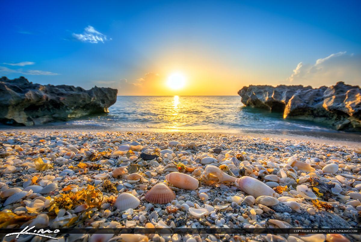 Seashells at Coral Cove Beach Park