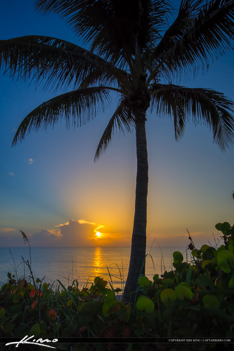 Sunrise Ocean with Coconut Tree from Jupiter Island