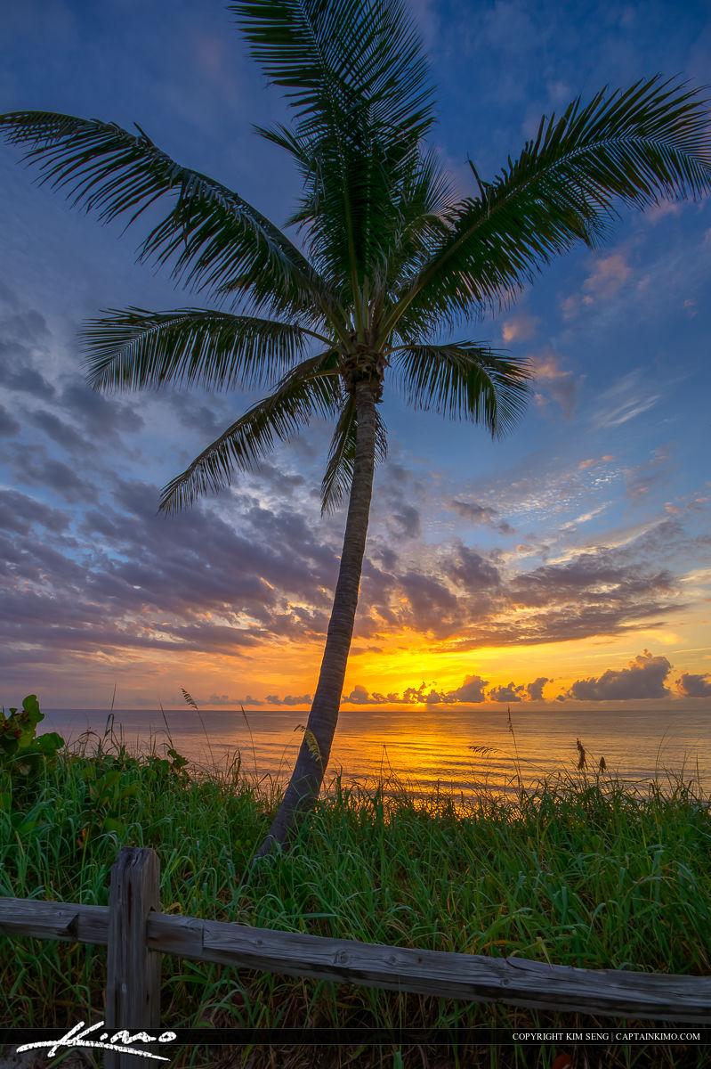 Ocean Sunrise with Coconut Palm Tree Florida