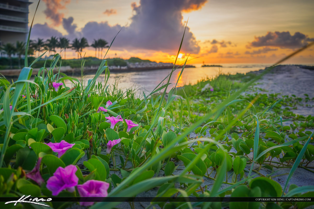 Pink Flower at Sunrise Boca Raton Inlet